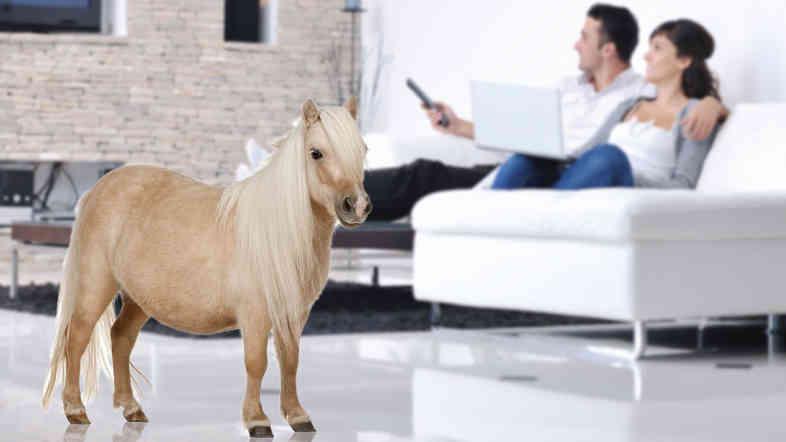 Condo Pony