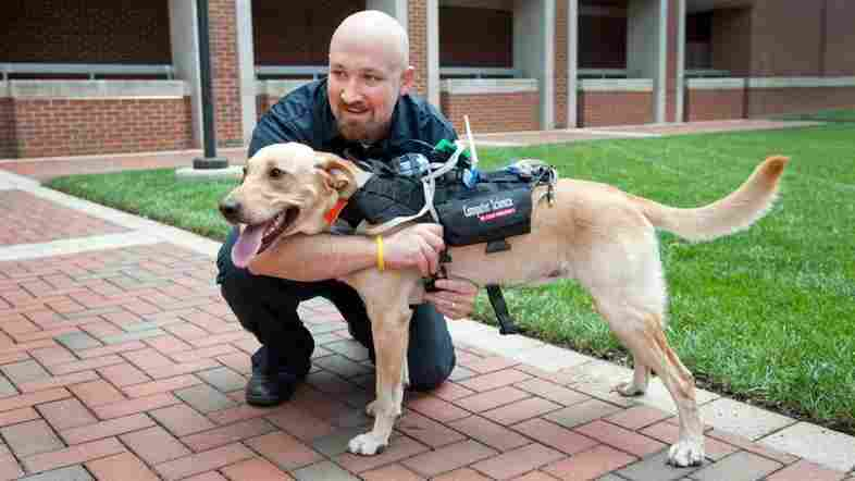 David Roberts says the Cyber-Enhanced Working Dog harness will allow humans to monitor dogs' physical and emotional states remotely, such as in search-and-rescue operations.