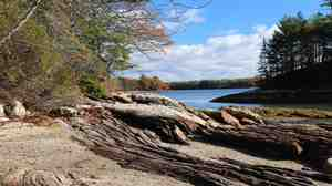 Wolfe's Neck Woods State Park, near Freeport, Maine.