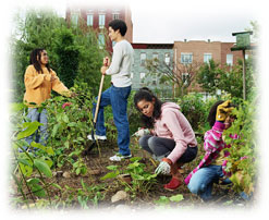 Photograph of a group of people working in a community garden near some apartment buildings.