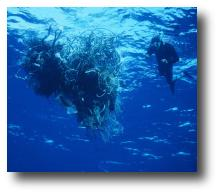 Picture of a scuba diver next two a ball of tangled fishing gear.