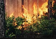 A wildfire consumes a forest