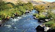 A small rural stream