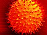 Ffalse-color electron microscope scan of prairie hollyhock pollen