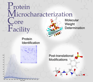 Protein Microcharacterization Core Facility. DNA graphic for Molecular Weight Determination, Protein identification diagram, molecular structure diagram of Post-Translational Modifications, and line graph.