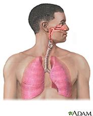 Ilustración del sistema respiratorio