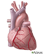 Illustration of the heart
