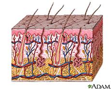 Ilustración de las capas de la piel