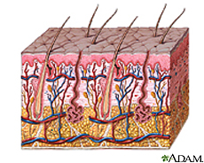 Illustration of skin layers
