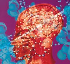 Fotografía de modelos moleculares sobre una sección transversa de la cabeza humana