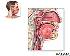 Ilustración de la anatomía de la garganta