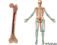 Illustration of a long bone