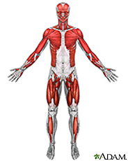 Ilustración de los músculos