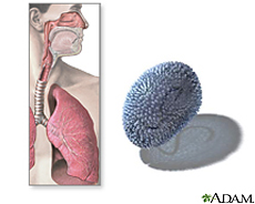 Illustration of the respiratory tract and the influenza virus