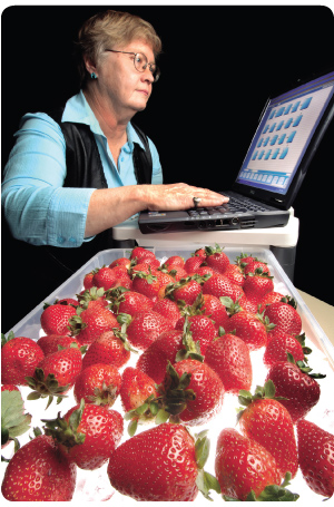 Photo of Susan Carson, a Sandia researcher, working at a computer with a tray of strawberries in the forground.