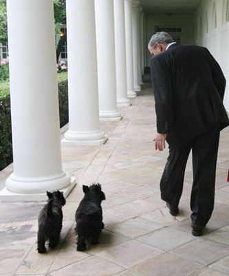 Barney and Miss Beazley follow President George W. Bush along the West Wing Colonnade Wednesday, July 23, 2008, on the way back to the Oval Office at the White House. White House photo by Joyce Boghosian