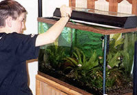 A  boy and a fish tank