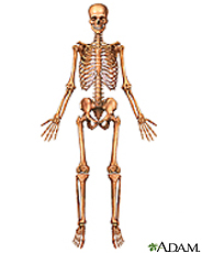 Ilustración del esqueleto