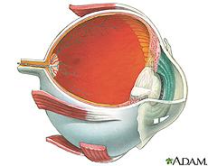 Ilustración de la anatomía interna del ojo