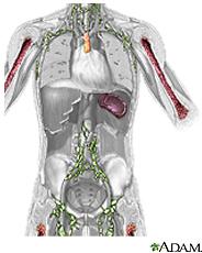 Ilustración del sistema inmune