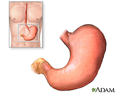 Illustration of the stomach