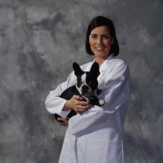 Photograph of a Veterinarian with a Boston Terrier