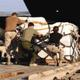 people unloading supplies from airplane