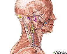 Ilustración de los ganglios linfáticos de la cabeza y cuello