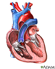 Illustration of the inside of the heart