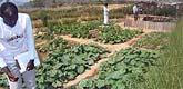 Produce from Lake Malawi