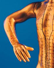 Photograph of a model of a human arm and chest with acupuncture points