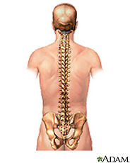 Illustration of the spine
