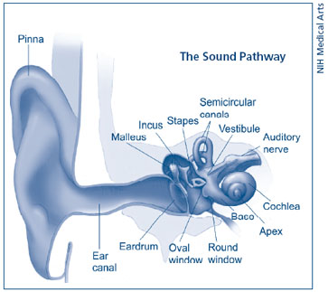 Illustration showing the sound pathway.