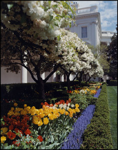 Photo of the White House from the Rose Garden.