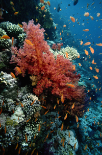 MPAs protect delicate ecosystems, like coral reefs.