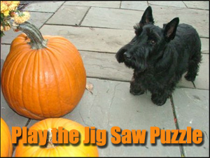 Play the Jig Saw Puzzle