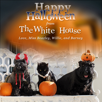 First Family pets get in the Halloween spirit, Friday, Oct. 17, 2008, in a portrait on the Blue Room balcony on the south side of the White House. From left are Miss Beazley, Willy the cat, and Barney. The dogs are Scottish Terriers. White House photo by Joyce N. Boghosian