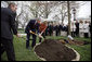 President George W. Bush and Mrs. Laura Bush shovel dirt to plant a Scarlet Oak tree Wednesday, April 9, 2008, at the commemorative tree planting on the North Lawn of the White House. The tree is being planted to replace a tree that fell on October, 25, 2007, a Scarlet Oak that had been planted in 1892 by President Benjamin Harrison. Relatives of President Benjamin Harrison were invited to join the President and Mrs. Bush at the tree planting ceremony, Harrison's great-grandson, Ben Walker, is seen at left. White House photo by Eric Draper