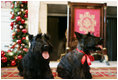 Barney and Miss Beazley make a visit to the Red Room at the White House, Wednesday, Nov. 29, 2006, to see the holiday decorations.