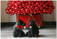 Barney and Miss Beazley pose beneath a decorative red ornament Christmas Tree, Wednesday, Nov. 29, 2006, in the East Wing of the White House.