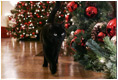 """Bush family cat Willie, nicknamed """"Kitty,"""" takes a stroll to visit the Christmas decorations in the East Room of the White House, Wednesday, Nov. 29, 2006."""