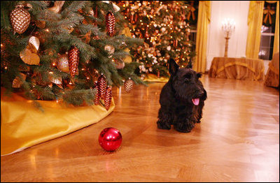 Barney finds a red Christmas decoration on the State Floor of the White House, while looking at all the holiday decorations Wednesday. Nov. 28, 2007.