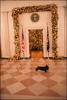 Miss Beazley runs through the Cross Hall on the State Floor of the White House, Wednesday, Nov. 28, 2007, to see the decorations in the State Dining Room.