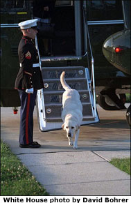 Dave the dog departs Marine 2 and returns to his home at the Naval Observatory. White House photo by David Bohrer.
