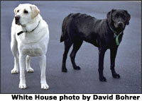 Vice President Dick Cheney's Labrador Retrievers, Dave (left) and Jackson (right), stand by their house at the Naval Observatory May 19, 2002. White House photo by David Bohrer.