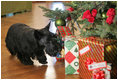 On his walk, Barney discovers a few presents. However, they are addressed to Miss Beazley, and not him!