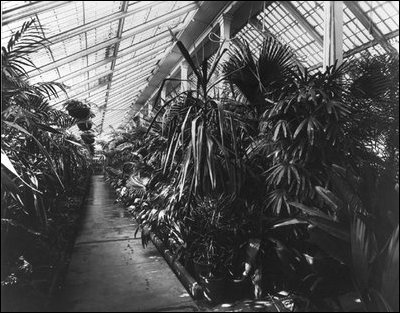 The interior space of the conservatories created a lush private garden for the first family to enjoy year round, c. 1890.