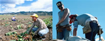 Photos of field and construction laborers.