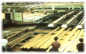 Lumber conveyor in operation