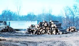 Logs in log yard